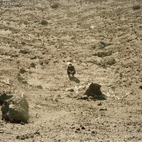 Noonday Dream-Ben Howard-CD