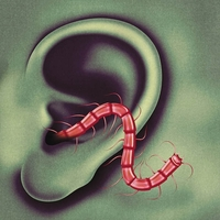 An Odd Entrances-Thee Oh Sees-LP