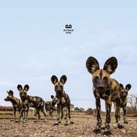Fever-Balthazar-LP
