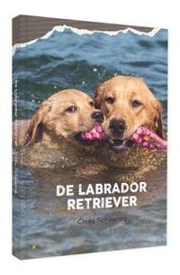 De labrador retriever-Cindy Schwering